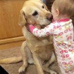 赤ちゃんと犬って本当に可愛い2つのコラボレーション!
