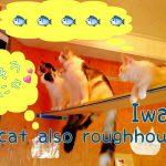 猫のTV番組に夢中!思わず立ち見する猫たちが面白い動画♪