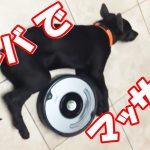 そ、それはゴミじゃwwお掃除機ルンバにマッサージされる犬の動画