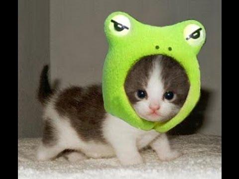 可愛い猫の爆笑ハプニング動画集ww