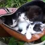 捨てられていた猫を保護する感動動画