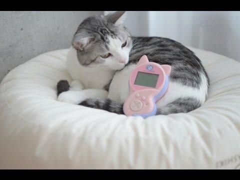 ニャウリンガルで猫と意思疎通できるのか実験動画ww