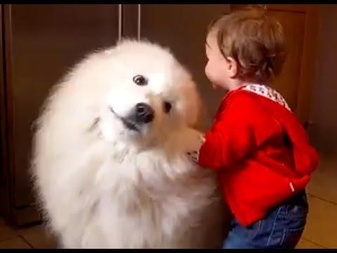 もっふもふの白いサモエド犬が可愛すぎると自分の中で話題に!?
