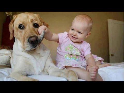犬にじゃれる赤ちゃん、この組み合わせがかわいすぎる!