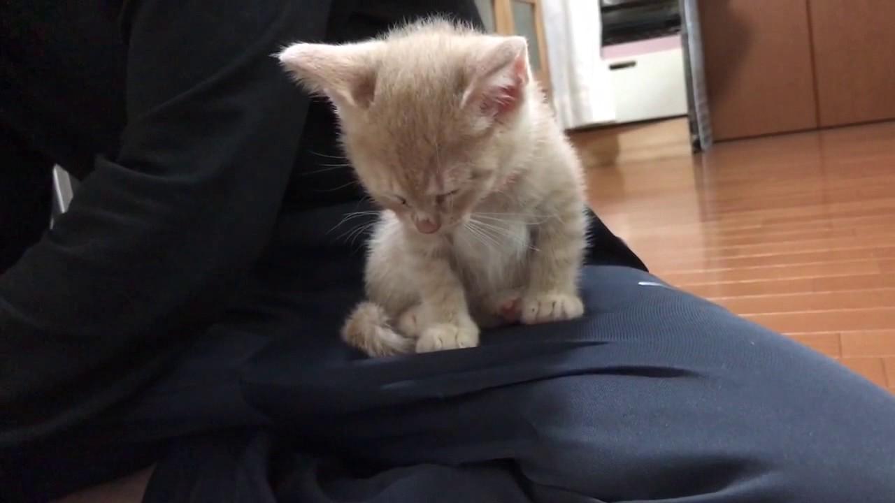 お腹いっぱいで眠たげなかわいい子猫