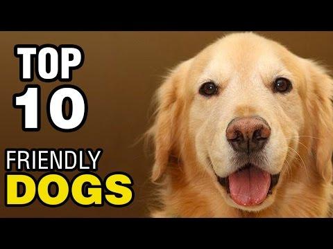 確かに思わず笑ってしまう犬の動画集