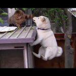 ワニワニ(ワンワン)パニック!?猫パンチが炸裂!