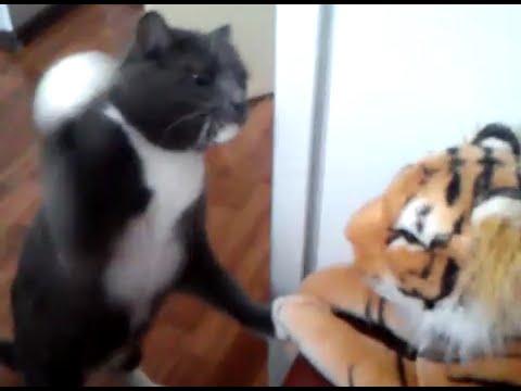 ネコ科頂上決戦!?猫パンチ炸裂な猫🐱vs虎🐯