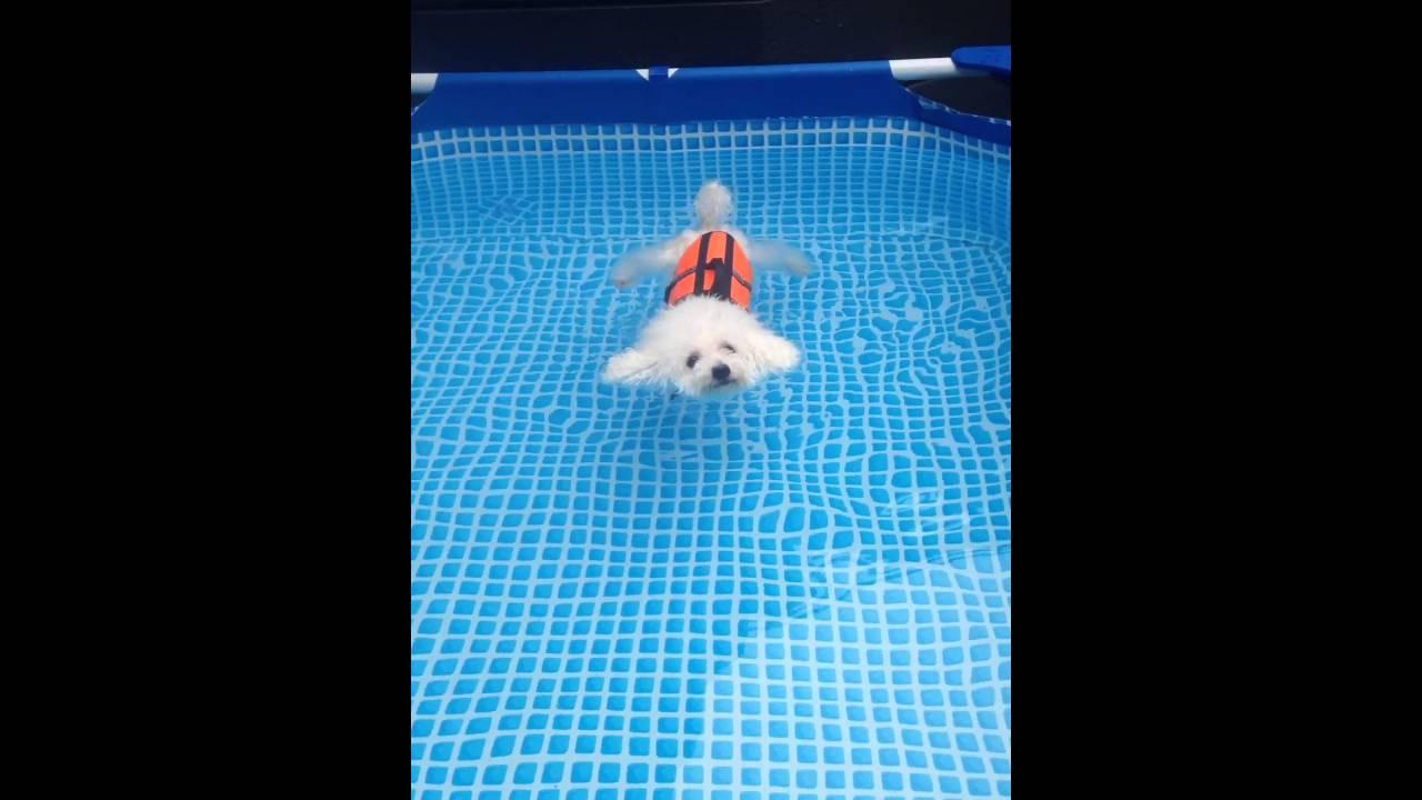 プカプカ浮かぶ!ビジョンフリーゼの水泳デビュー(・ω<)