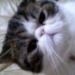 びっくり!童謡を歌える猫ちゃん(☼ Д ☼)