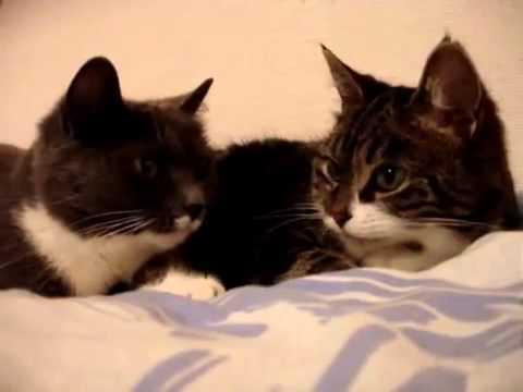 何を話してるか気になる(*・ω・)!猫ちゃん達の秘密の会議♡