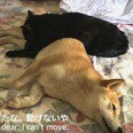 そんなところで寝なくても・・・仲良し犬&猫ちゃん♡