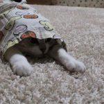 服の中からひょっこり!でてきたのはキュートな猫ちゃん♡