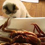 挟まれないでね?猫ちゃん対カニの対決