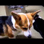 「ヒーターつけて?」圧の強い犬猫コンビ♡