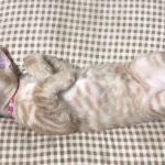 猫ちゃんの大変な爪切りは寝ている間にコッソリと・・・♡