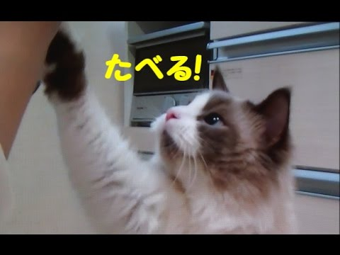 「タベル〜!」と鳴く猫に萌え〜♡