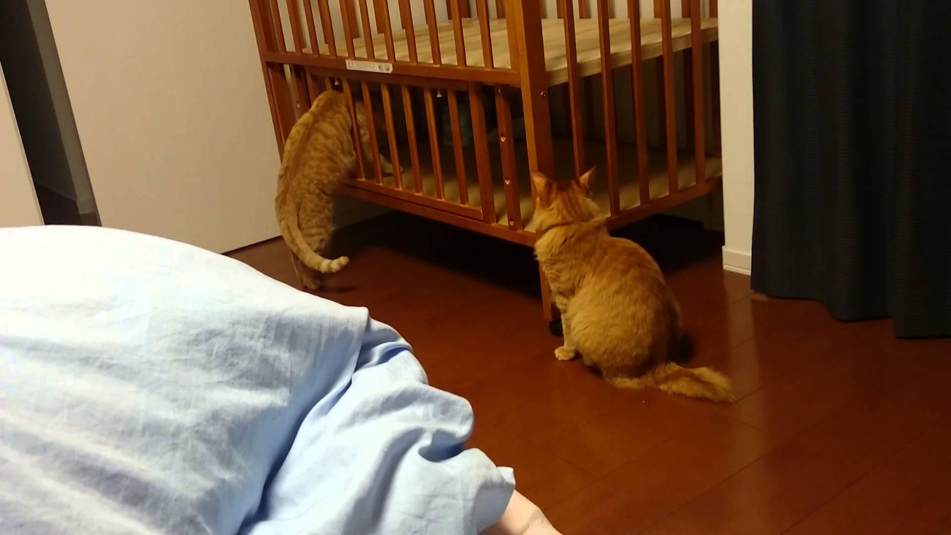 猫ちゃんの珍行動!?ベビーベットに挟まる猫ちゃん♡