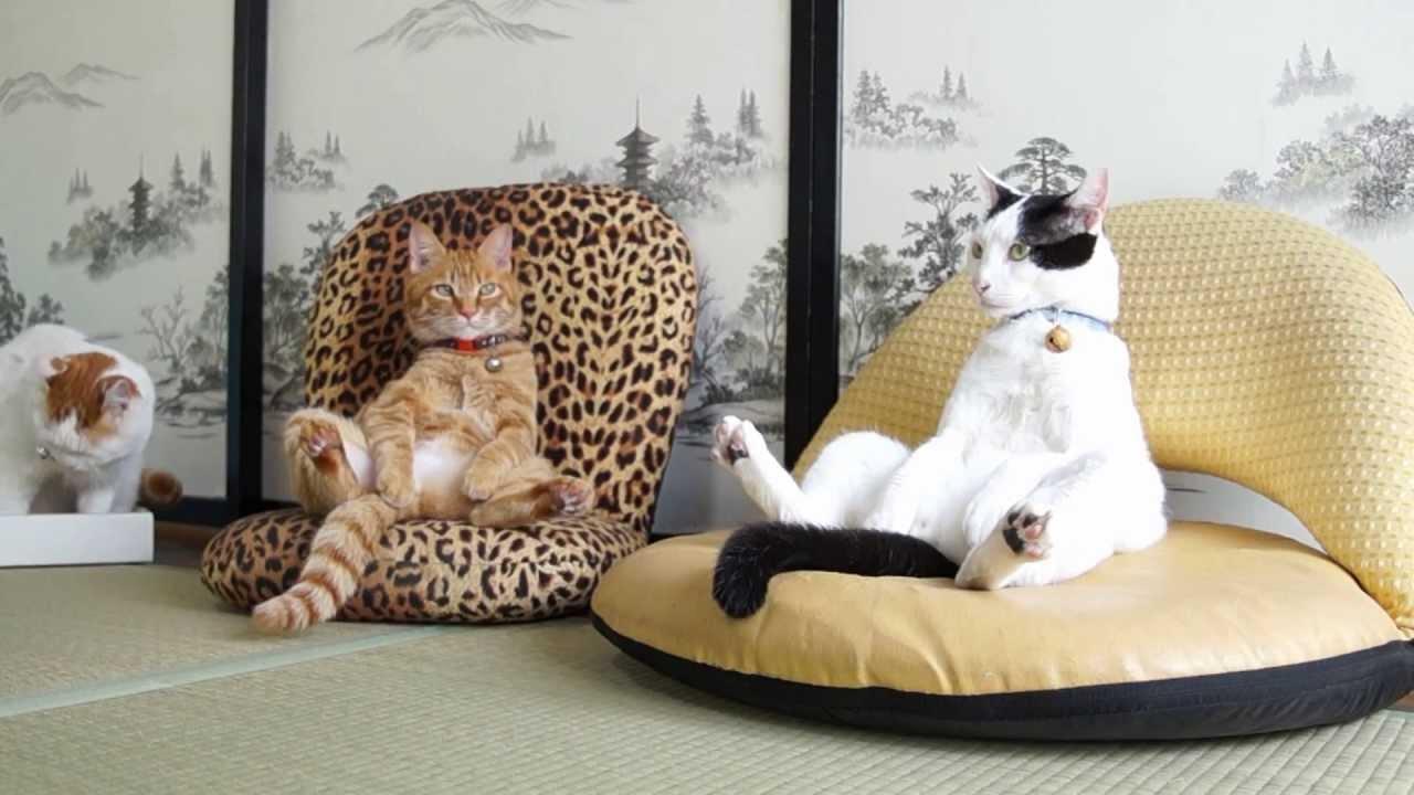 そんな座り方アリ?座椅子猫ちゃんズ♡