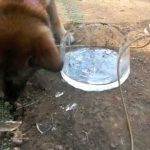 氷をガリガリかじって食べている犬を眺めているのが幸せ(о´∀`о)