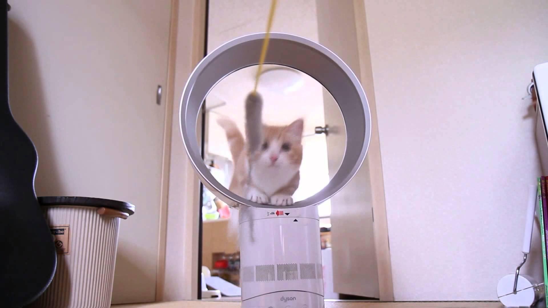 あの扇風機で!?猫ちゃんの輪くぐりチャレンジ♡