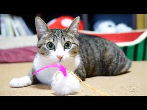 「怖かったにゃ〜泣」緊急地震速報にビックリする猫ちゃん!