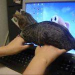 パソコンを邪魔しに来た猫ちゃんの行動が可愛すぎる♡