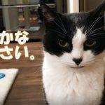 健気なおねだりにズッキューンな猫ちゃん♡
