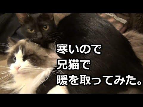くっつくと暖かいんだにゃ♡寒がり猫ちゃんたちがギュ〜!