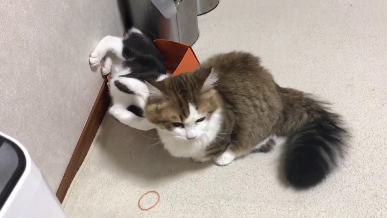 猫ちゃんたちの箱とり合戦の結末にほっこり♡