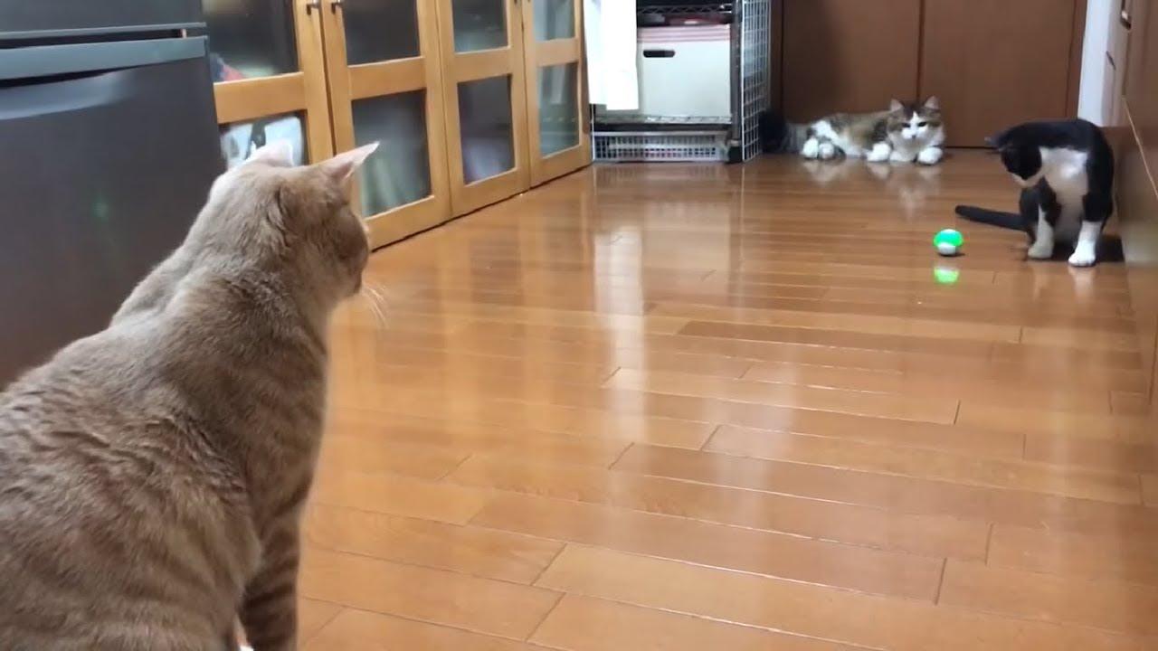 スマホで動かせる最新おもちゃに夢中な猫ちゃん達♡