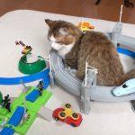 おもちゃの電車のトンネルを作るマンチカン♡