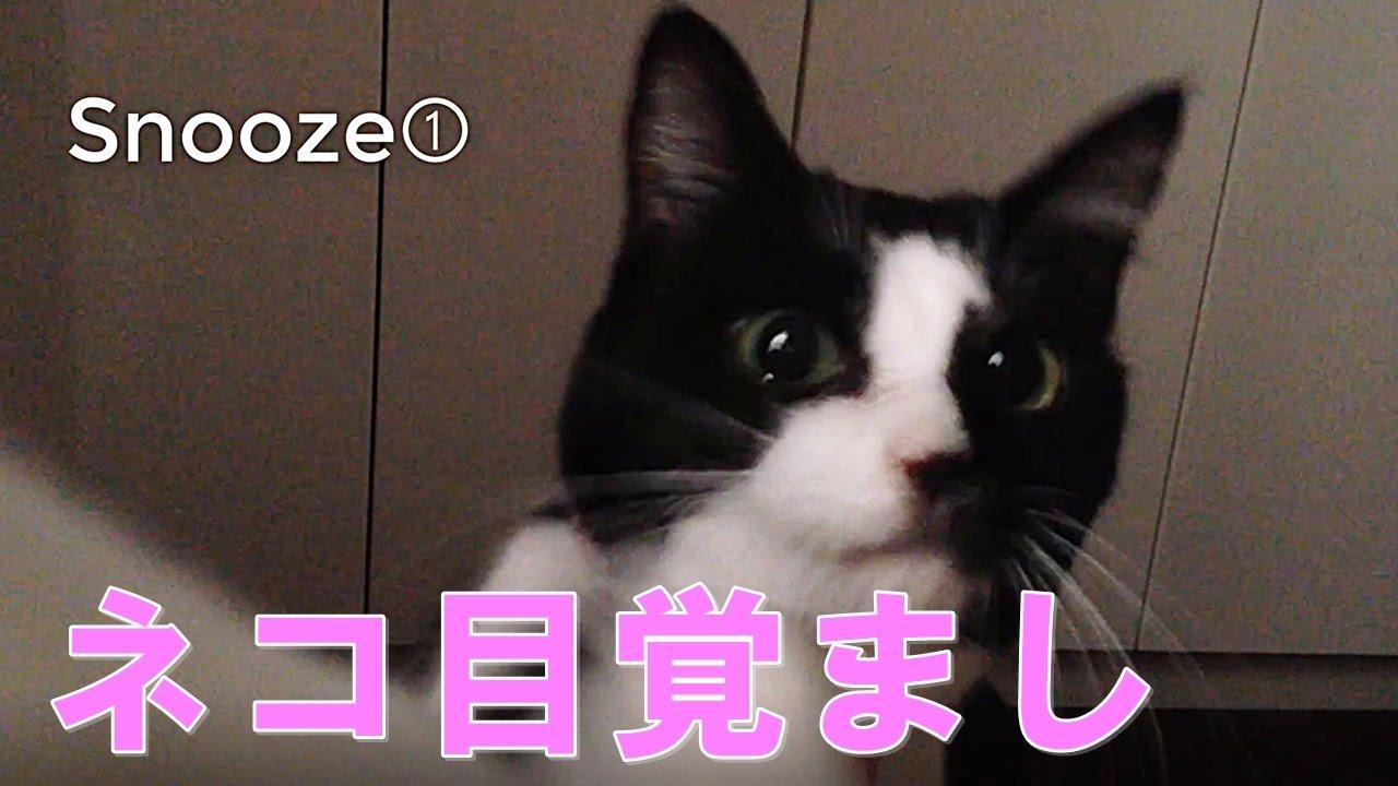 もうメロメロ〜!猫に起こされる気分を味わえちゃう?♡