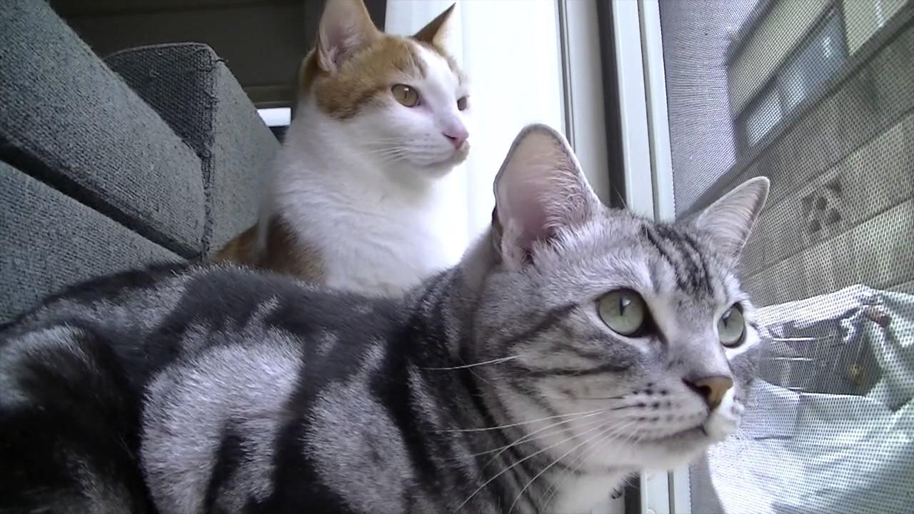 猫ちゃんだってお仕事中?お家の警備に勤しむニャンコ達♡