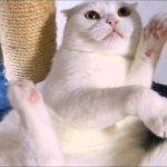 爪にはゼッタイ触らせないにゃ〜!!猫ちゃんの爪切りに一苦労・・・