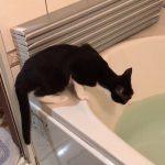 お風呂の縁からソ〜っと手を伸ばして〜?な猫ちゃん♡