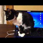 パソコンの上でくつろぐ猫ちゃん♡パソコンを強制終了!?