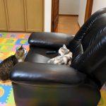 先住ネコさんに挨拶する律儀な猫さん♡