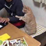 何してるの〜?と隣で覗き込む猫ちゃんが可愛い♡