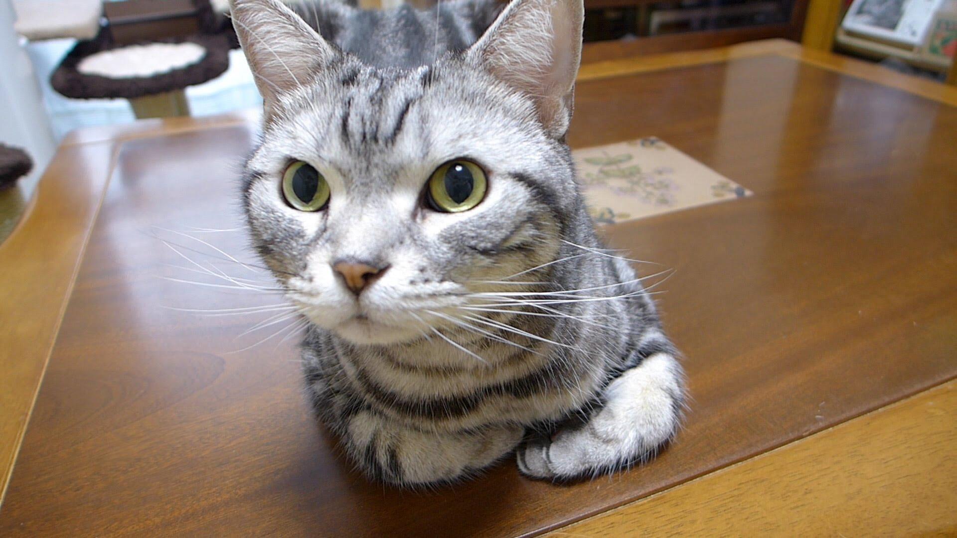 おやつ食べる?猫は人語を理解し喜びを爆発♪