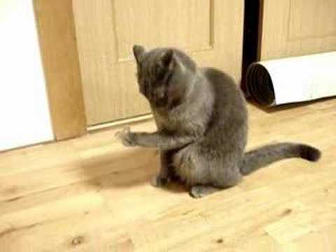 手についたテープを凝視して固まる猫♪