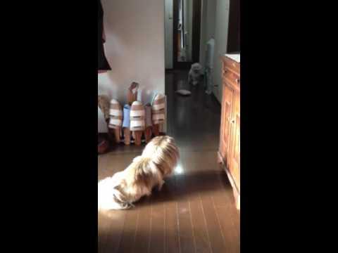 犬同士で見つめ合い、そろーりそろーり近づいてからのダッシュ♪