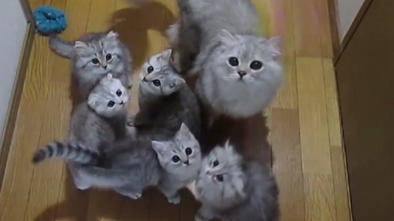 子猫ちゃん達がじゃれ合う姿にキュン死確定!