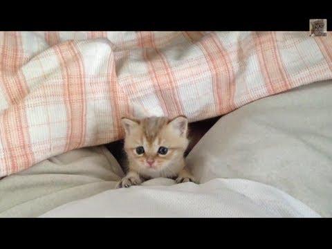 毛布のスキマからかわいい赤ちゃん猫です♪