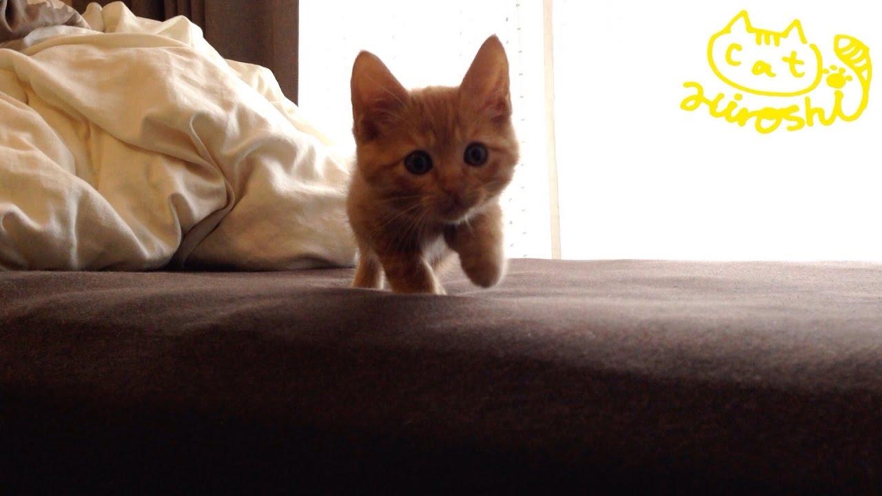 茶トラの子猫がそろーりそろーり近づいてくる♪