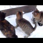 好奇心旺盛の猫たちの外遊び♪