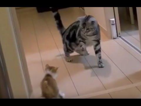 先輩アメショと新入り子猫の距離感が可愛い♪