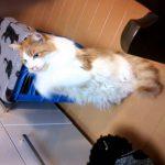 おねだり連発猫の10秒動画ww
