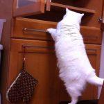 ジャンプしそうでしない猫ちゃん♪