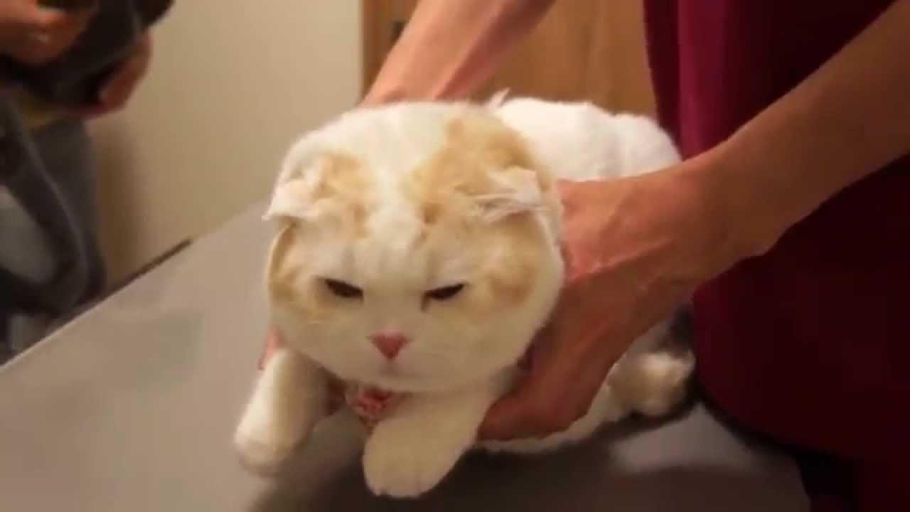 無抵抗感が半端ない真ん丸な猫ちゃん♪